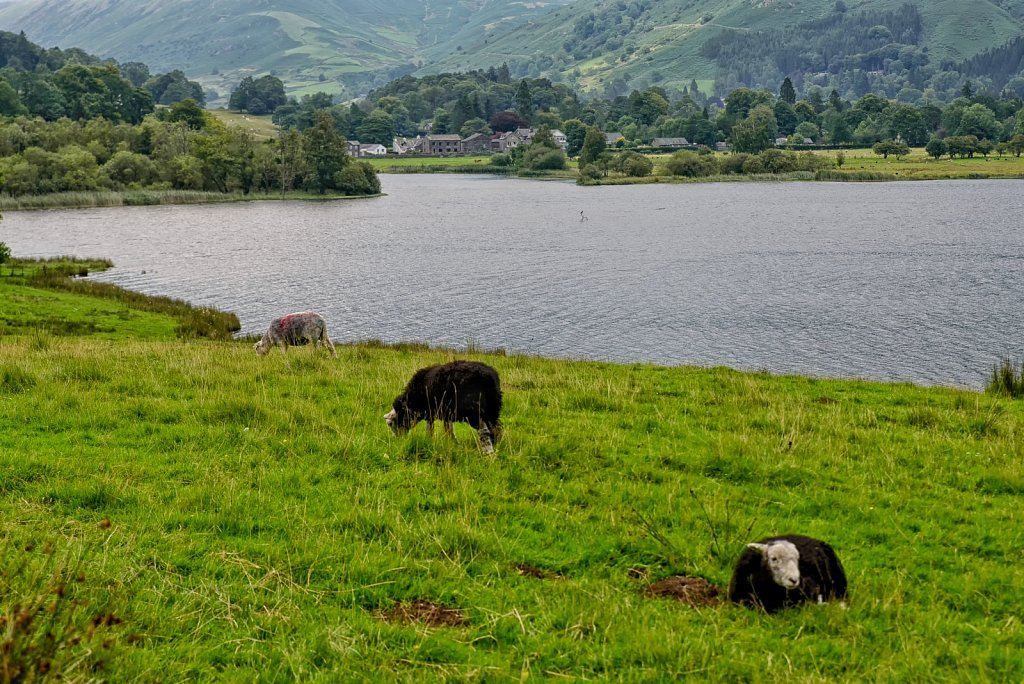 Grasmere. England. United Kingdom.